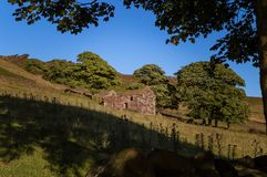 Sunset lights the trees, heather, rocks and ruined barn at Roach End. stock photos