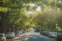 Sunset lights up the tree tunnel. Los Angeles , APR 21: Sunset lights up the tree tunnel on APR 21, 2017 at Los Angeles, California stock photo
