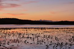 Sunset on lilly pad lake Stock Photography