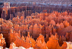 Sunset Lit Hoodoos of Bryce Canyon Stock Photos