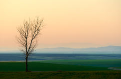 Sunset with lonely tree Stock Photography