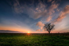 Before sunset. Lonely tree before sunset, Bulgaria Royalty Free Stock Image