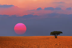 Sunset lonely tree. In desert Stock Photography