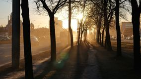 Sunset Long Shadows of Trees in City Street.  stock video footage