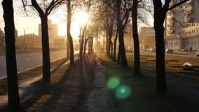 Sunset Long Shadows of Trees in City Street.  stock footage