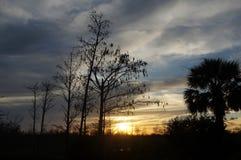 sunset in the Louisiana Swamp stock photo