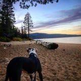 Sunset with Luna. Beach sunset Lake Tahoe Stock Photos