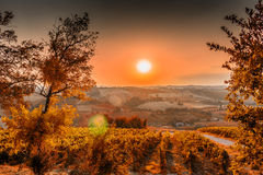Sunset on lush farmland in hilly countryside. Organic farming in hill – sunset on lush vineyards and farmland in the quiet hilly countryside royalty free stock photography