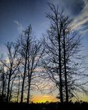 Sunset Macon Georgia. Macon Georgia orange sunset with tall trees