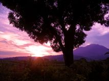 Sunset In Magenta Color. Beautiful sunset in magenta color, tree, red clouds, and mountain. Best for wallpaper royalty free stock photo