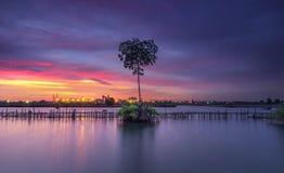 Sunset magic alone tree. Red blue yellow twiligth moment landscape amazing stock photography