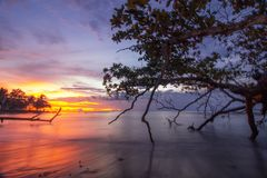 Sunset magic alone tree. Red blue yellow twiligth moment landscape amazing royalty free stock images