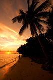 Sunset on Malola Island, Fiji. Palm tree and beach with a woman walking in to the sunset Stock Photos