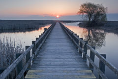 Sunset at the marsh boardwalk at Point Pelee, Canada. Sunset at the marsh boardwalk at Point Pelee in Canada stock images