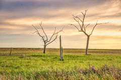 Golden Meadow, Louisiana. A sunset in the marsh near Golden Meadow, Louisiana. A forest was once here as recent as 100 years ago, but coastal erosion is taking Royalty Free Stock Photography