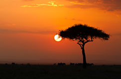 Sunset in the Masai Maria National Reserve Royalty Free Stock Photo