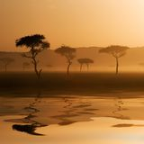 Sunset in Massai Mara Royalty Free Stock Images