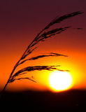 Sunset in a meadow Royalty Free Stock Images