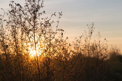 Sunset Meadow Background Stock Photography
