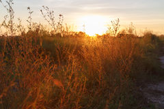 Sunset Meadow Background Stock Image