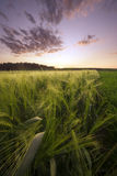Sunset in The Meadow Stock Photography