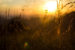 Sunset meadow Stock Photo