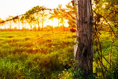 Sunset on a meadow near Marcardsmoor Royalty Free Stock Images