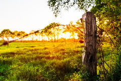Sunset on a meadow near Marcardsmoor Royalty Free Stock Image