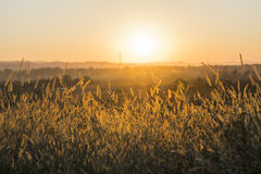 Sunset Meadow Stock Image