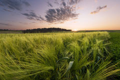 Sunset At The Meadow Stock Image