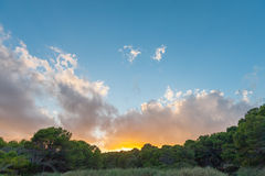 Sunset on a Mediterranean forest Stock Photos