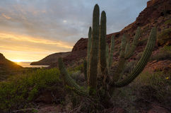 Sunset in the mexican desert Stock Image