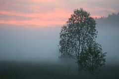 Sunset and mist over the meadow. Summer background landscape stock image