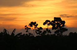 Sunset moment. View of Sunset moment behind trees Stock Photography