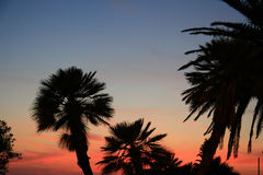 Sunset in Montenegro. Summer in Montenegro. In the evening. Palms Royalty Free Stock Photo