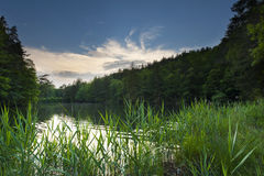 Sunset mood at lake in midden of wood and forest w Royalty Free Stock Photography