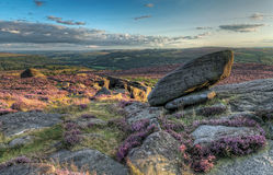 Sunset at Moorland. Heather in bloom over the rugged moor in Derbyshire, Peak District Royalty Free Stock Images