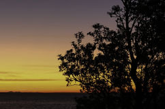Sunset Mornington, Victoria. Sunset behind You Yangs across Port PhillipBay in Mornington. silhouette of a tree Royalty Free Stock Image