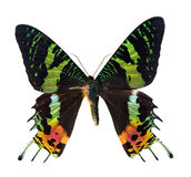 Sunset moth Royalty Free Stock Images
