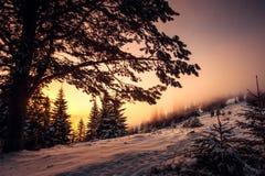 Sunset mountain. Landscape carpathian Ukraine Stock Image