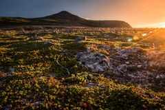 Sunset on the mountain plateau, with sun flare and golden tones in tundra vegetation stock image