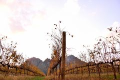 Sunset In Mountain Vineyard Stock Images