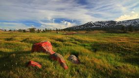 Sunset in the mountains of Altai, Mongolia. Meadow with edelweisses stock video footage