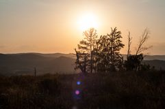 Sunset in the mountains, in the foreground spruce and several tree trunks. Burned in a long fire royalty free stock photography