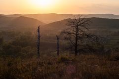 Sunset in the mountains, in the foreground spruce and several tree trunks. Burned in a long fire royalty free stock photo