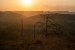 Sunset in the mountains, in the foreground spruce and several tree trunks. Burned in a long fire stock images