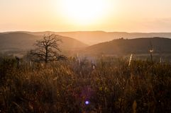 Sunset in the mountains, in the foreground spruce and several tree trunks. Burned in a long fire stock photo