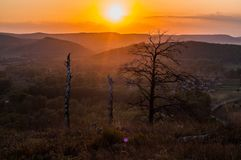 Sunset in the mountains, in the foreground spruce and several tree trunks. Burned in a long fire royalty free stock image