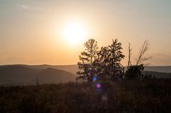 Sunset in the mountains, in the foreground spruce and several tree trunks stock photo