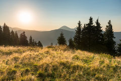 Sunset in the mountains with forest Royalty Free Stock Images